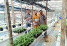 Melawat Kebun Hidroponik Di Arrizq Farm, Kg. Kulambai Kota Belud