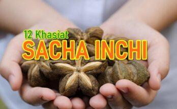 12 Khasiat Tanaman Kekacang 'Superfood' Sacha Inchi
