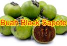 9 Khasiat Buah Black Sapote Rasa Seperti Puding Coklat (Chocolate Pudding Fruit)