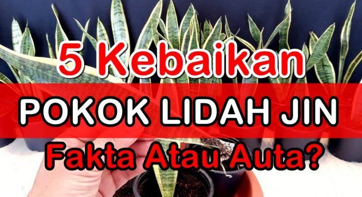 5 Kebaikan Pokok Lidah Jin, Lidah Mak Mertua 'Snake Plant' & Cara Menanamnya